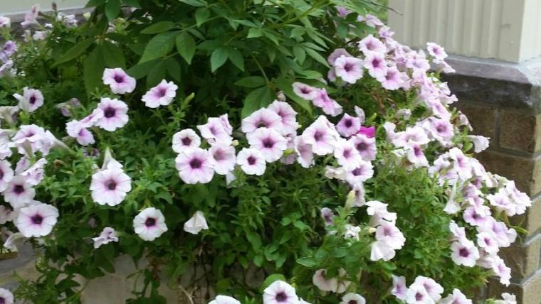 Planters – The Landscaper's Most Versatile Accessory